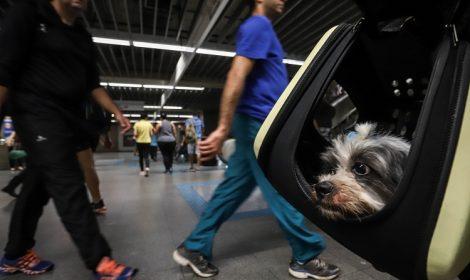 Ônibus da Metra agora podem transportar seu pet